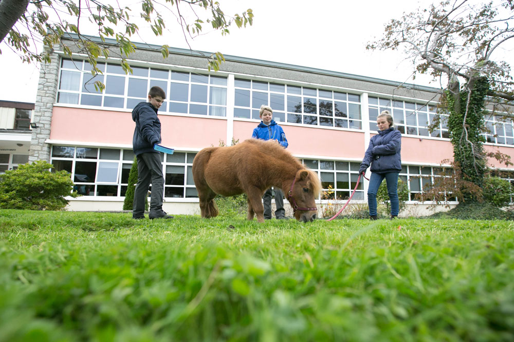Shetland pony from Festina Lente visiting Saint Augustine's School